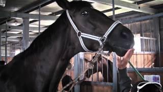Соревнования по конному спорту памяти Андрея Бессонова