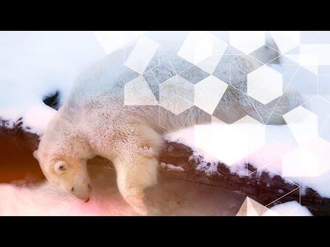 звукоизоляционные панели что с медведем которому кинули петарду последние новости Арзамасского