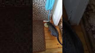 Шокшокдали кошке яйцо...приколы с котами Не скажи вау проиграешь