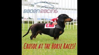 Video Crusoe Dachshund at the Horse Races! Baden Racing, Germany download MP3, 3GP, MP4, WEBM, AVI, FLV Januari 2018