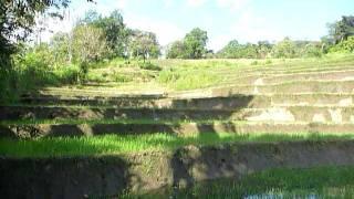 Sri Lanka,ශ්රී ලංකා,Ceylon,Beautiful Rice Paddy Terraces (04)