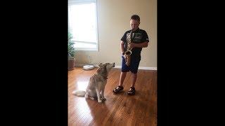 Siberian Husky Sings with Saxophone 🎷(Vertical Video)