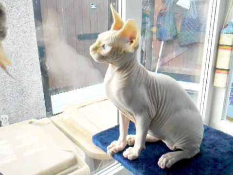 matted cat hair solution
