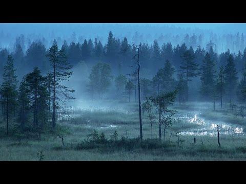 Finnish Folk Music - Forests of Finland