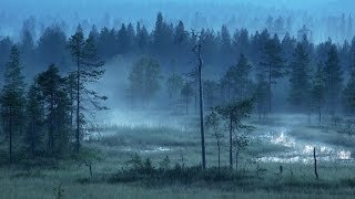 Finnish Folk Music - Forests of Finland