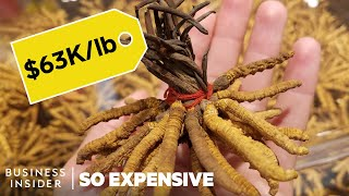 Why Caterpillar Fungus Is So Expensive | So Expensive