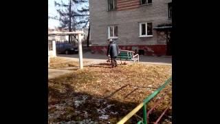 Выгул собак на детской площадке Лесная 3