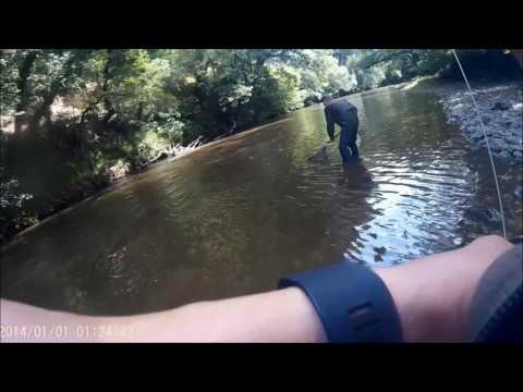 River Torridge Salmon - Oak Tree Run