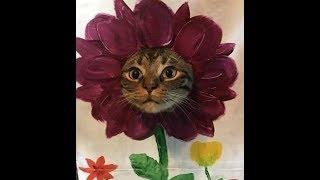 Феноменально смешные кошки! Подборка приколов с котами, кошками и котятами