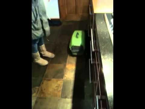 Cat running into glass door! - YouTube
