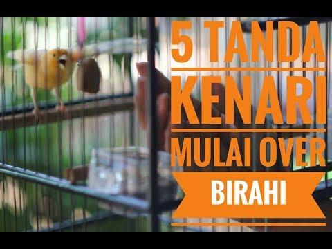 Download Lagu 5 TANDA-TANDA KENARI OVER BIRAHI
