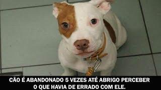 Cão é abandonado 5 vezes até abrigo perceber o que havia de errado com ele.