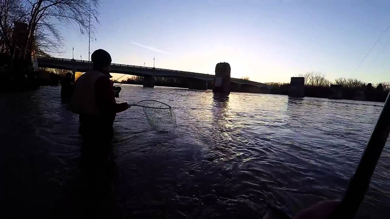 Maumee river walleye run part 1 limit it out in 30 minutes for Maumee river fishing report