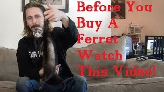 BEFORE you BUY a FERRET watch this VIDEO!(Facts about ferrets! Things you should know before buying one! How to bathe ferrets: http://youtu.be/C0ETutID_v0 How to clip ferret nails: ..., 2013-12-24T23:37:20.000Z)