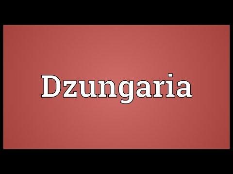 Header of Dzungaria