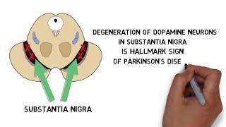 2-Minute Neuroscience: Parkinson's Disease