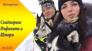 Скиджоринг две собаки. Саратов 16 декабря. Инфинити и Шторм. Хаски