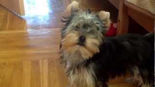 Собака лает на кошку(via YouTube Capture., 2013-03-22T07:29:53.000Z)