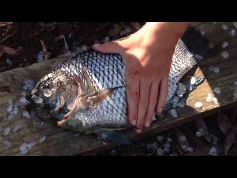Hunting fish in the jungle and cooking food in place