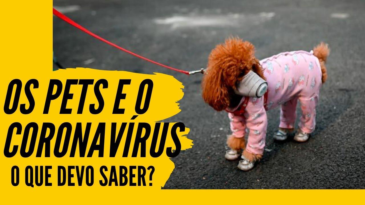 O CORONAVÍRUS E NOSSOS PETS