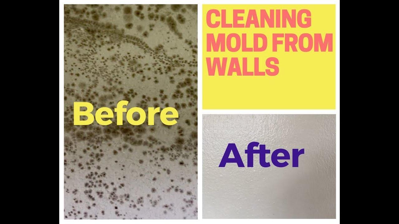 How To Remove Mold From Walls Drywall