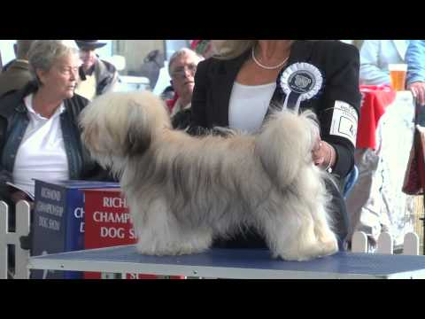 Richmond Championship Dog Show 2013 - Toy group