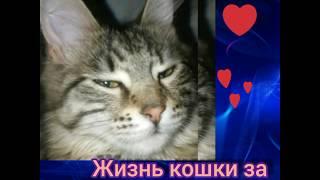 День кошки за минуту