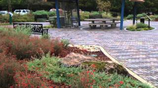 Rain Garden: Slowing Pollution at Its Source