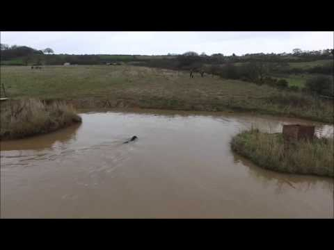 wirral-gundogs:-barry-cooper-blind-retrieve-over-water