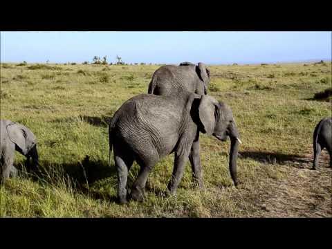 Masai Mara Safari 15.11.2014