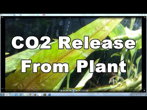 How Plant releases Co2 Under water naturally At night. Aquairum Plant Co2. Aquarium Filter.