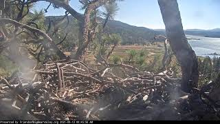 Preview of stream Big Bear Bald Eagle Cam
