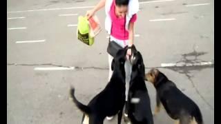 собаки любят женщин!!!