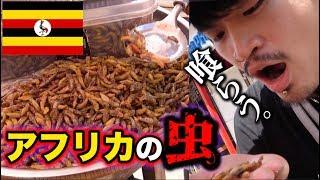 【昆虫食】ゴリラの国ウガンダに行ったら。〜ぼったくり虫食い編〜