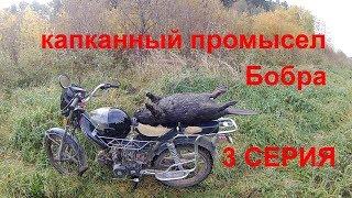 Капканный промысел бобра 3 серия (beaver hunting)