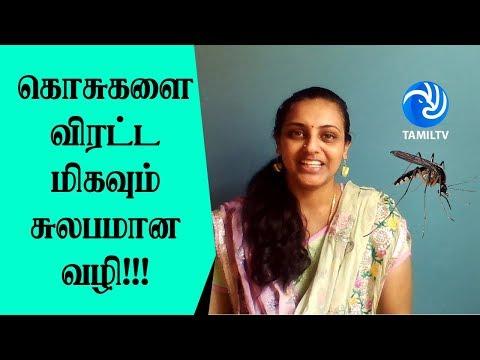 கொசுகளை விரட்ட மிகவும் சுலபமான வழி!!! Natural Mosquito Repellent You Must Try - Tamil TV