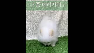 포메라니안 솜사탕이 유투브intro
