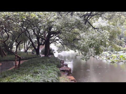 Lotus Garden -  Hangzhou, China