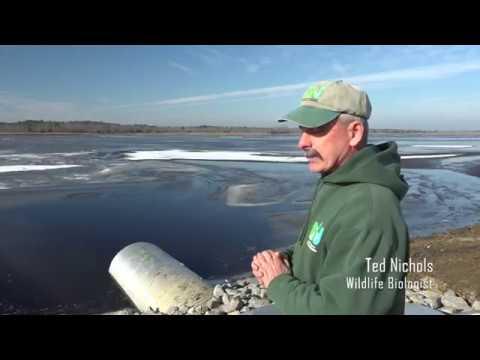 Tuckahoe Impoundment Restoration Project