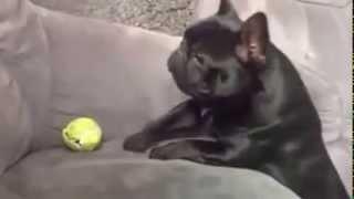 Los Perros mas tontos del mundo
