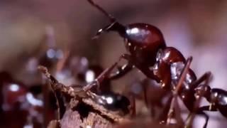 [TGĐV] Cuộc chiến kinh hoàng giữa bầy kiến và tổ mối chúa