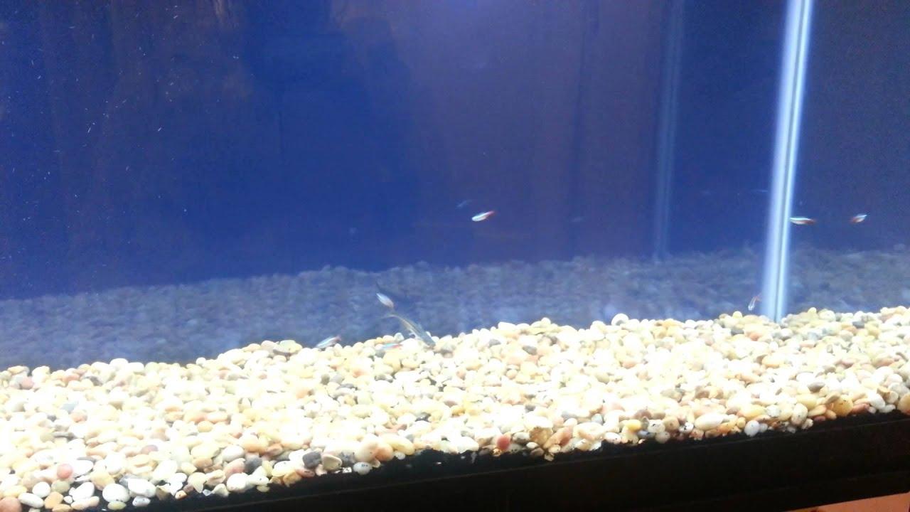 55 gallon tank update plus new fish and fish ideas