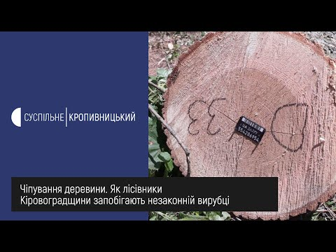 Суспільне Кропивницький: Чіпування деревини  Як лісівники Кіровоградщини запобігають незаконній вирубці