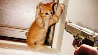 Por qué los gatos son las mejores mascotas # 6