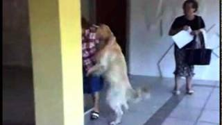 stray dog humps lady!!