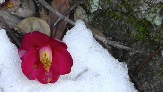 Nature scenes in Japan - winter season plants, flowers and trees