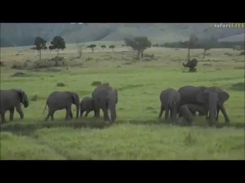Safari Live : Brent in the Masai Mara this afternoon on June 02, 2017