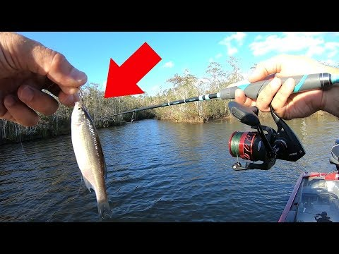 Using The BEST Live Bait For Fish Every Cast