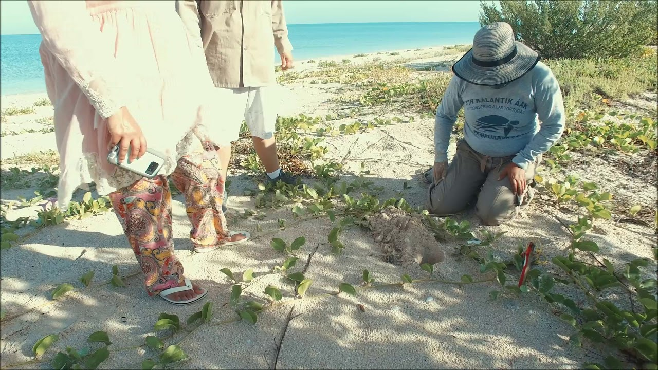 Yucatan Peninsula's Sea Turtle Monitoring Program