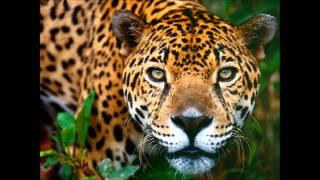 Maskio & Sebastien Leger - Jaguar (Freaker Booty Mix)